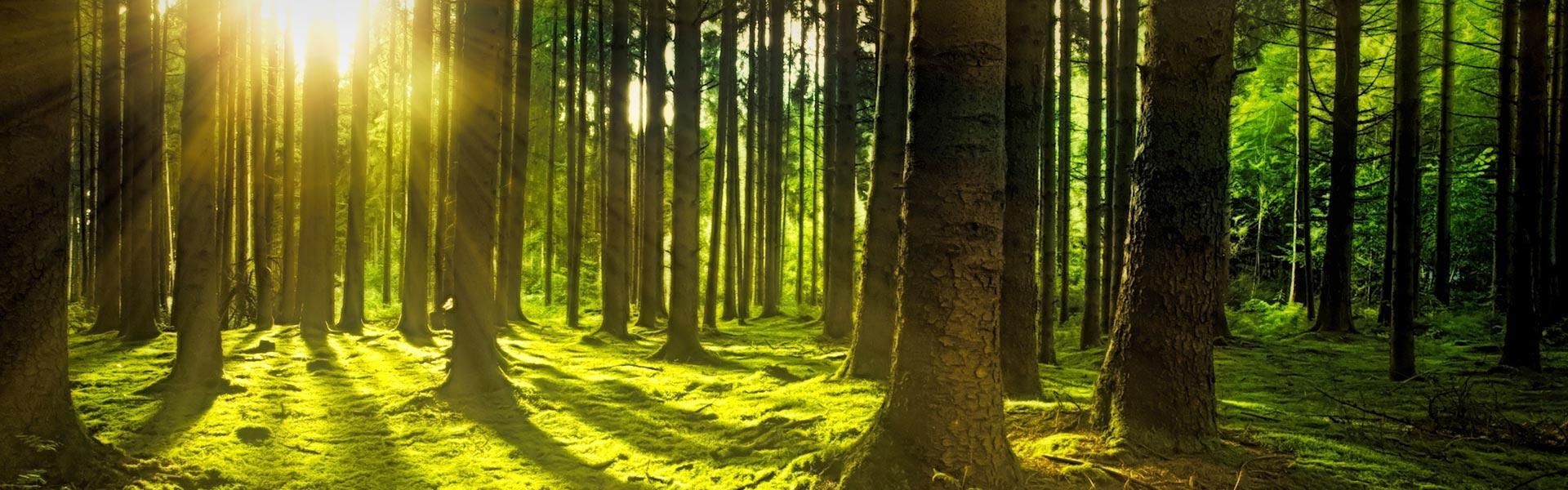 L'impegno per uno sviluppo sostenibile appresenta per la Brizzi Distribuzione un'importante variabile nella gestione dell'azienda